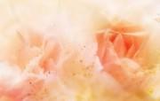 朦胧花朵柔美 宽屏壁纸 壁纸75 朦胧花朵柔美 宽屏壁 系统壁纸