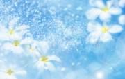 朦胧花朵柔美 宽屏壁纸 壁纸28 朦胧花朵柔美 宽屏壁 系统壁纸