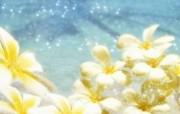 朦胧花朵柔美 宽屏壁纸 壁纸54 朦胧花朵柔美 宽屏壁 系统壁纸