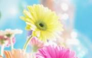 朦胧花朵柔美 宽屏壁纸 壁纸55 朦胧花朵柔美 宽屏壁 系统壁纸