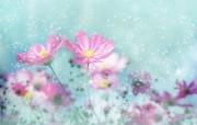 朦胧花朵柔美 宽屏壁纸 壁纸79 朦胧花朵柔美 宽屏壁 系统壁纸
