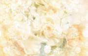 朦胧花朵柔美 宽屏壁纸 壁纸82 朦胧花朵柔美 宽屏壁 系统壁纸