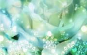 朦胧花朵柔美 宽屏壁纸 壁纸83 朦胧花朵柔美 宽屏壁 系统壁纸