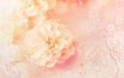 朦胧花朵柔美 宽屏壁纸 壁纸60 朦胧花朵柔美 宽屏壁 系统壁纸
