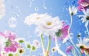 朦胧花朵柔美 宽屏壁纸 壁纸37 朦胧花朵柔美 宽屏壁 系统壁纸