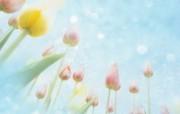 朦胧花朵柔美 宽屏壁纸 壁纸85 朦胧花朵柔美 宽屏壁 系统壁纸