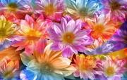 Photoshop花 系统壁纸