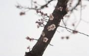 日本摄影师mockmoon 高清风光宽屏摄影壁纸 二 壁纸30 日本摄影师mockm 系统壁纸