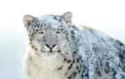 Snow Leopard自带 2 16 Snow Leopard自带 系统壁纸
