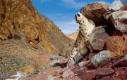 Snow Leopard自带 2 15 Snow Leopard自带 系统壁纸