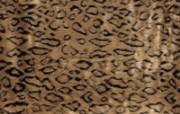 材质背景 2 15 材质背景 炫彩壁纸