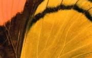 羽毛翅膀特写 1 11 羽毛翅膀特写 炫彩壁纸