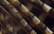 羽毛翅膀特写 1 4 羽毛翅膀特写 炫彩壁纸