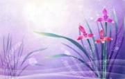 炫彩花卉合成 2 17 炫彩花卉合成 炫彩壁纸