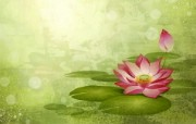 炫彩花卉合成 炫彩壁纸