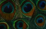 羽毛翅膀特写 2 20 羽毛翅膀特写 炫彩壁纸