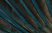 羽毛翅膀特写 2 14 羽毛翅膀特写 炫彩壁纸