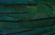 羽毛翅膀特写 2 10 羽毛翅膀特写 炫彩壁纸