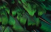 羽毛翅膀特写 2 9 羽毛翅膀特写 炫彩壁纸