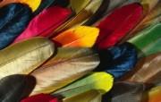 羽毛翅膀特写 2 2 羽毛翅膀特写 炫彩壁纸