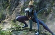 Avatar阿凡达 2 4 Avatar阿凡达 影视壁纸