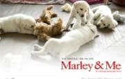 马利和我 Marley Me壁纸下载 好莱坞新上映电影壁纸合集2008年12月版 影视壁纸