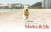 Marley Me 马利和我壁纸下载 好莱坞新上映电影壁纸合集2008年12月版 影视壁纸