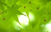 绿色主题摄影壁纸青葱世界 月历壁纸