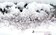 YAHOO韩国二月月历壁纸 月历壁纸