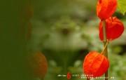 6月壁纸 花卉桌面壁纸 YAHOO韩国六月月历壁纸 月历壁纸