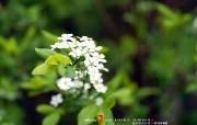 7月壁纸 花卉桌面壁纸 YAHOO韩国七月月历壁纸 月历壁纸