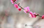 3月月历 桃花桌面壁纸 YAHOO韩国三月月历壁纸 月历壁纸