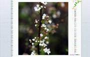 3月月历 春暖花开桌面壁纸 YAHOO韩国三月月历壁纸 月历壁纸