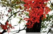 12月月历 红叶桌面壁纸 YAHOO韩国十二月月历壁纸 月历壁纸