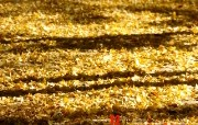 12月月历 满地黄色落叶桌面壁纸 YAHOO韩国十二月月历壁纸 月历壁纸