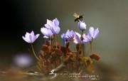 YAHOO韩国五月月历壁纸 5月月历 蜜蜂与花桌面壁纸 Yahoo 韩国五月月历壁纸 月历壁纸