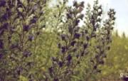 2009年7月夏植物摄影宽屏壁纸 1920x1080 壁纸4 2009年7月夏植物 植物壁纸