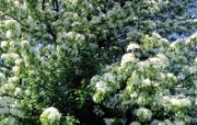 白色花朵壁纸 白色花朵壁纸 植物壁纸