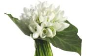 白色花卉桌面壁纸 白色花卉桌面壁纸 植物壁纸