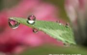 保护眼睛 春天的露珠与绿叶 保护眼睛春天的露珠与绿叶 植物壁纸