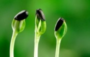 保护眼睛新芽嫩叶壁纸 保护眼睛新芽嫩叶壁纸 植物壁纸