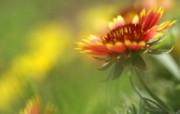 灿烂花朵特写壁纸 灿烂花朵特写壁纸 植物壁纸