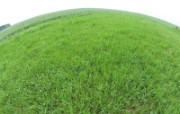 草原 田园 植物绿色高清壁纸 壁纸7 草原田园植物绿色 植物壁纸