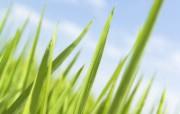 草原 田园 植物绿色高清壁纸 壁纸11 草原田园植物绿色 植物壁纸