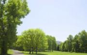 草原 田园 植物绿色高清壁纸 壁纸13 草原田园植物绿色 植物壁纸