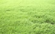 草原 田园 植物绿色高清壁纸 壁纸17 草原田园植物绿色 植物壁纸