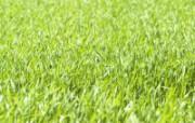 草原 田园 植物绿色高清壁纸 壁纸18 草原田园植物绿色 植物壁纸