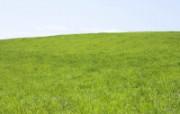 草原 田园 植物绿色高清壁纸 壁纸19 草原田园植物绿色 植物壁纸