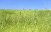 草原 田园 植物绿色高清壁纸 壁纸20 草原田园植物绿色 植物壁纸