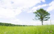 草原 田园 植物绿色高清壁纸 壁纸21 草原田园植物绿色 植物壁纸